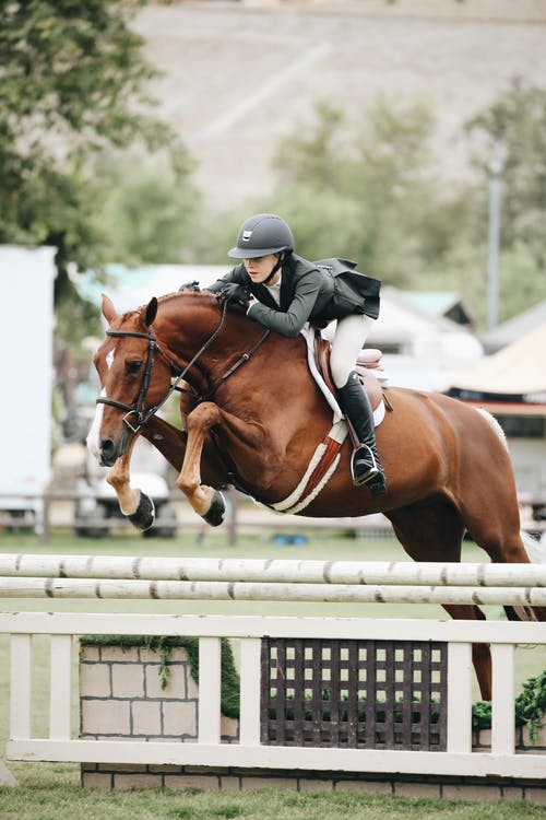 Strong healthy horse jumping
