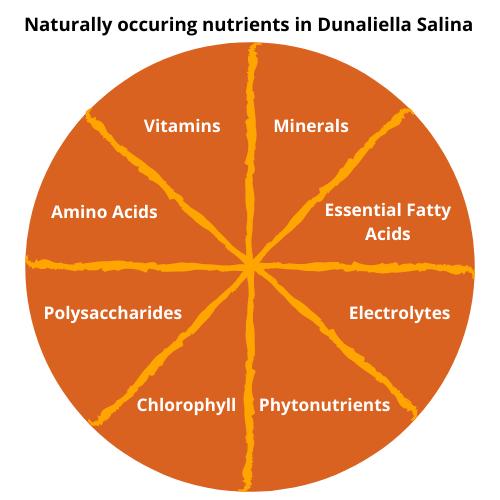 Vitamins, minerals, amino acids, polysaccharides, essential fatty acids, electrolytes, chorophyll, phytonutrients